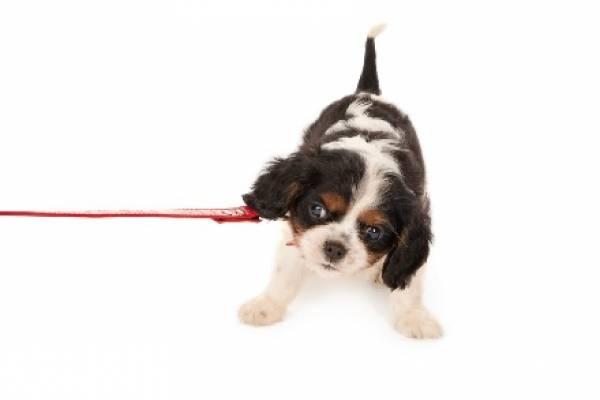 Utilizar a perros para exhibir productos es sancionado con hasta 347 dólares