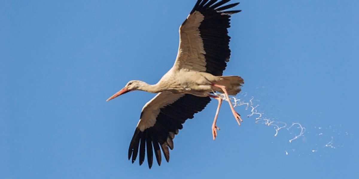 """""""La guerra de la caca"""": pájaros desatan pánico tras bombardear ciudad con excremento"""