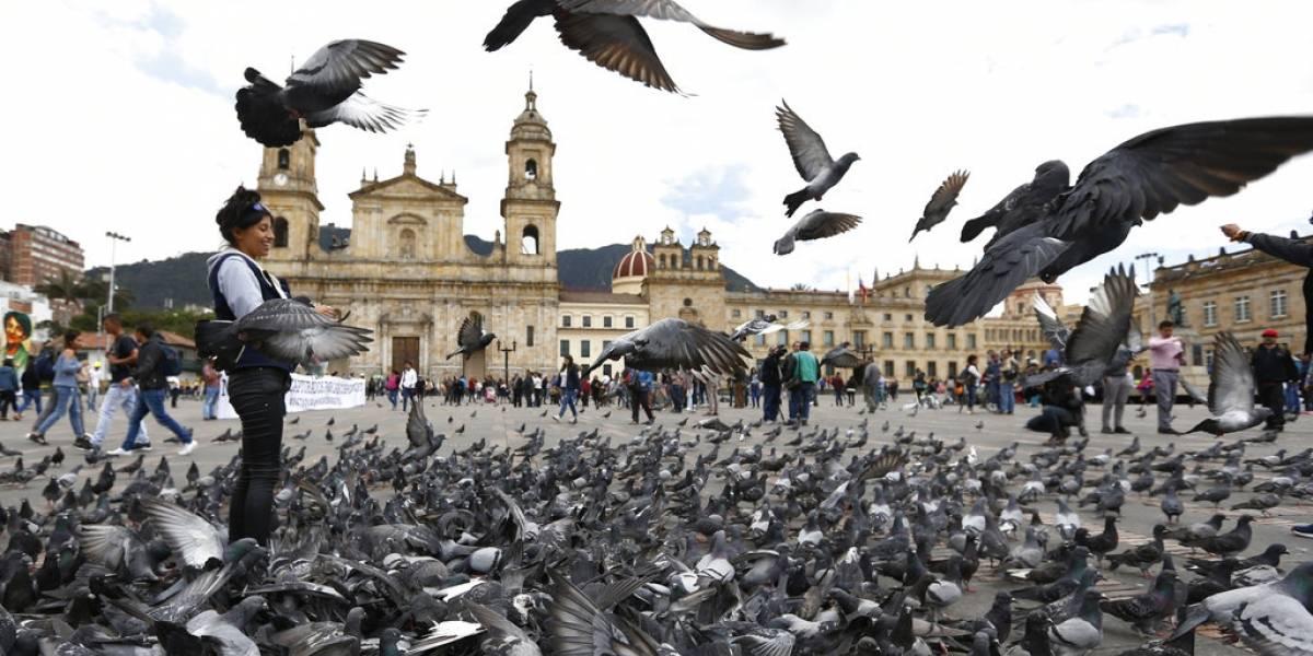 ¿Por qué Bogotá ha pedido a los turistas que no alimenten a las aves?