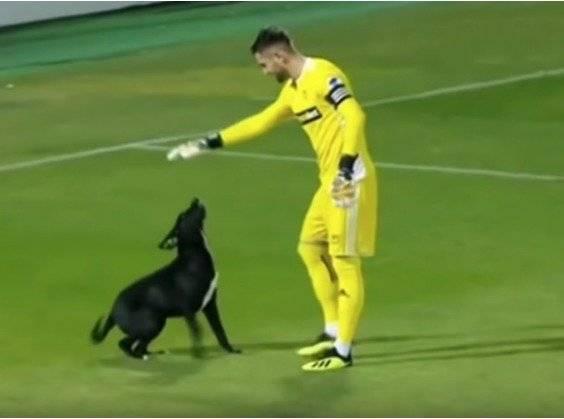 VIDEO: Un perrito invade la cancha y paraliza durante varios minutos un partido de fútbol Captura de pantalla
