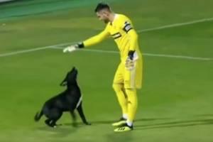 VIDEO: Un perrito invade la cancha y paraliza durante varios minutos un partido de fútbol