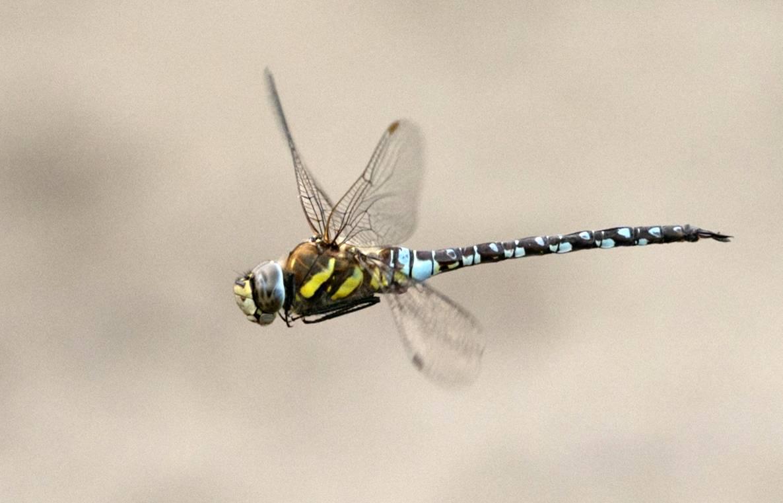 Rusia teme que Estados Unidos use insectos como armas biológicas