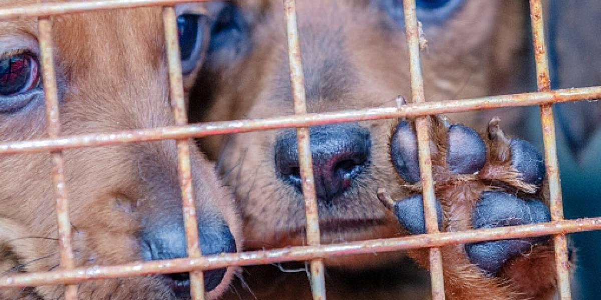 Indignante registro de golpiza a perros rescatados por parte de su cuidador