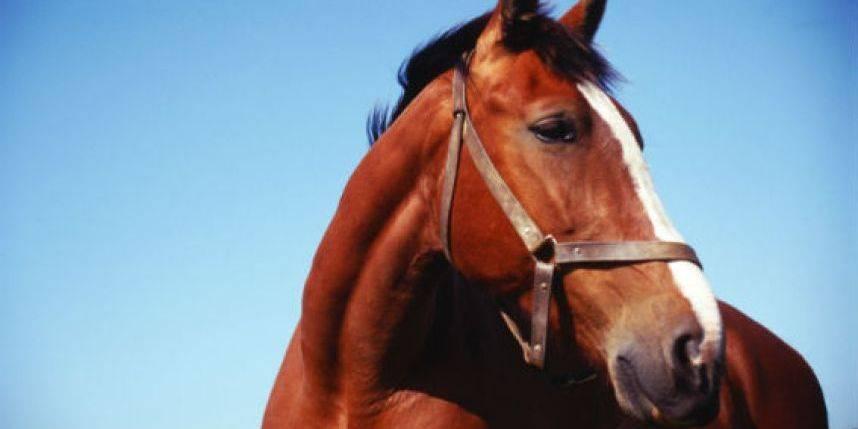 caballo-577f9adf13239baf2e91eb3051f6d13d.jpg