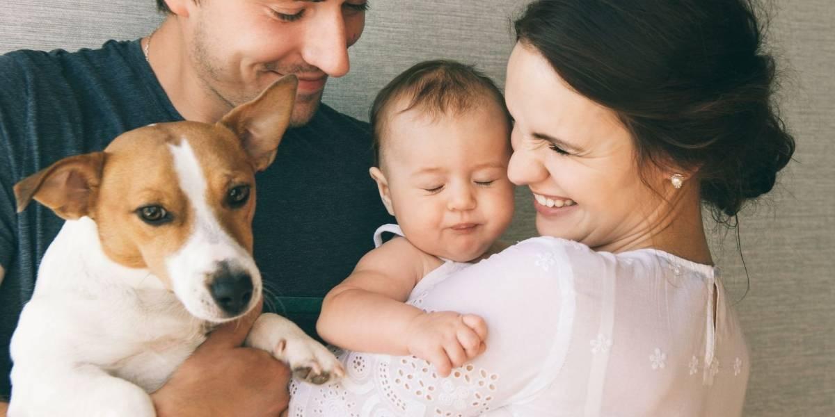 ¿Quién se queda con el perro? Campaña busca promover la tuición compartida de mascotas