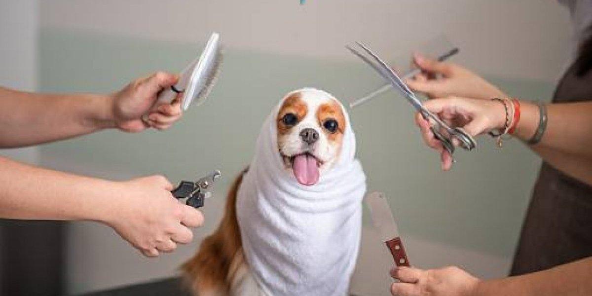 Lo importante del cuidado bucal de tu perro