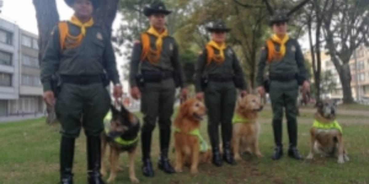 ¡Adopte un perrito héroe! Estos perros retirados de la Policía buscan un hogar
