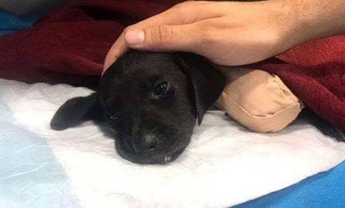 Cachorro es mutilado de patas y cola y es abandonado en un bosque