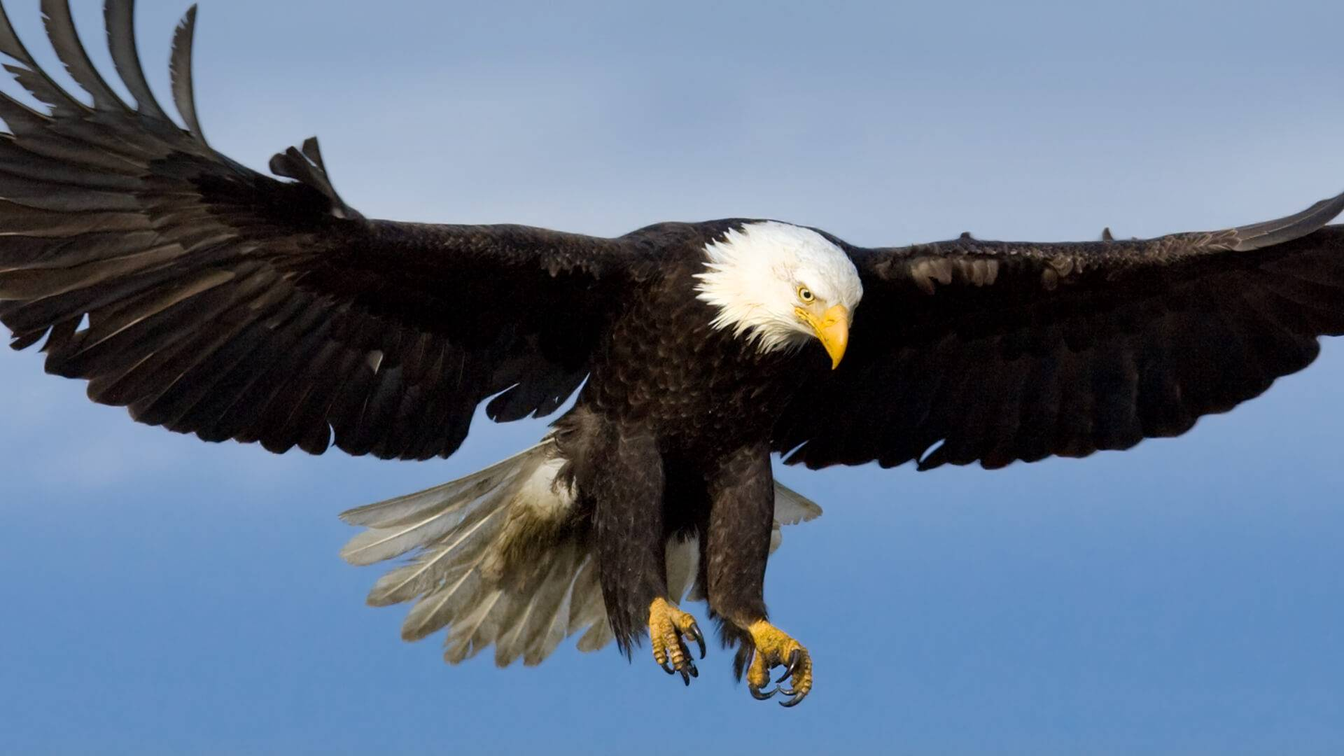 Científicos lograron crear método para que aves dejen de chocarse contra aviones