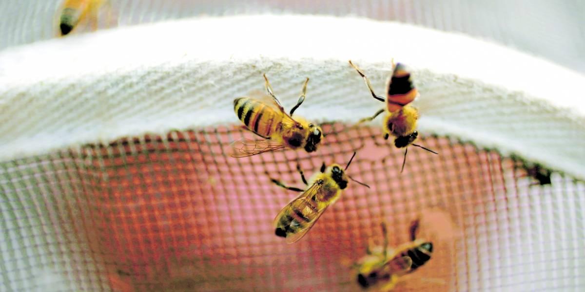 Crean abejas robot para la polinización en caso de la extinción de los insectos