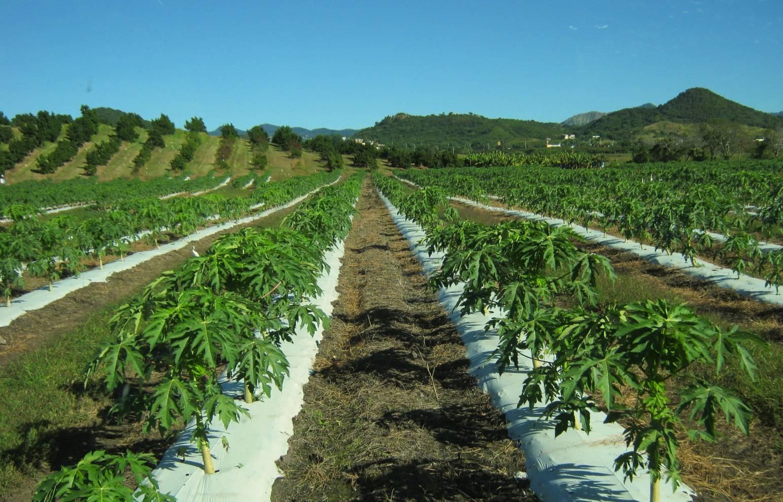 agriculturamorovis500907859-e6dd96f47f837befa62b4df815a2bbeb.jpg