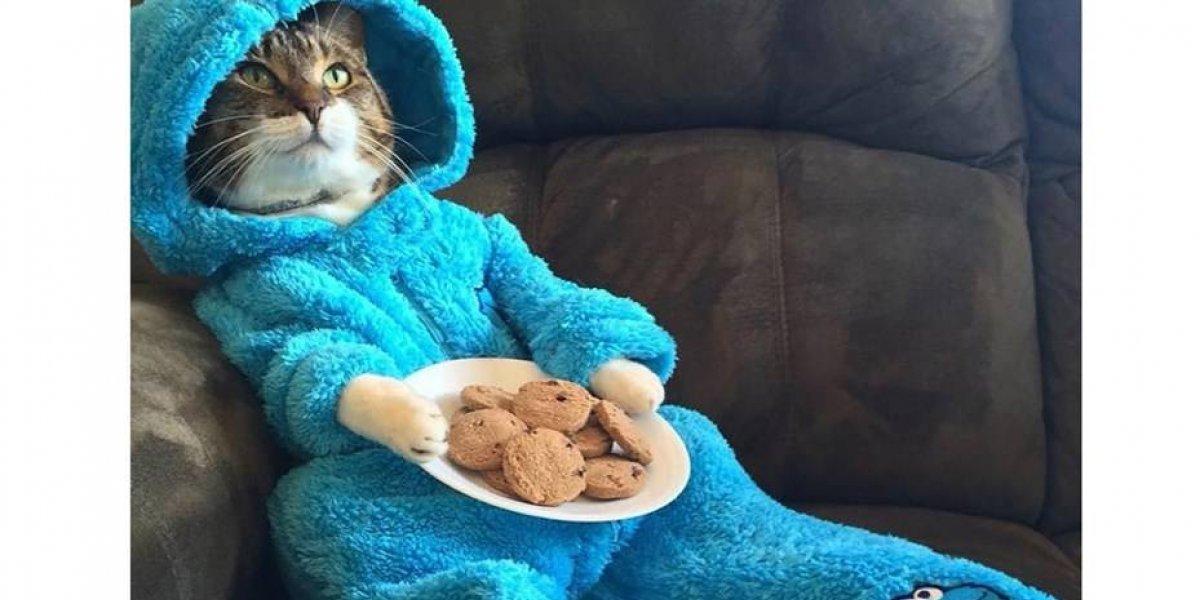 Embajada de EU en Australia se disculpa por invitación falsa de gato en pijama