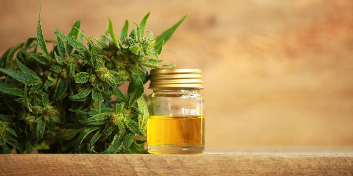 Regalarán 100 licencias de cannabis medicinal