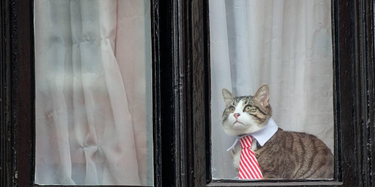 Julian Assange renunció a su gato que vivió con él durante dos años