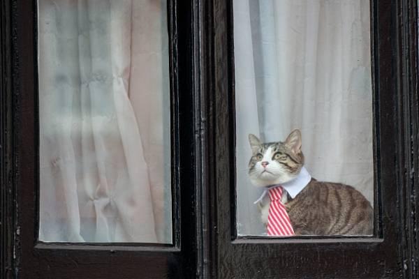 Polémica en embajada de Ecuador en Londres por el gato de Julian Assange