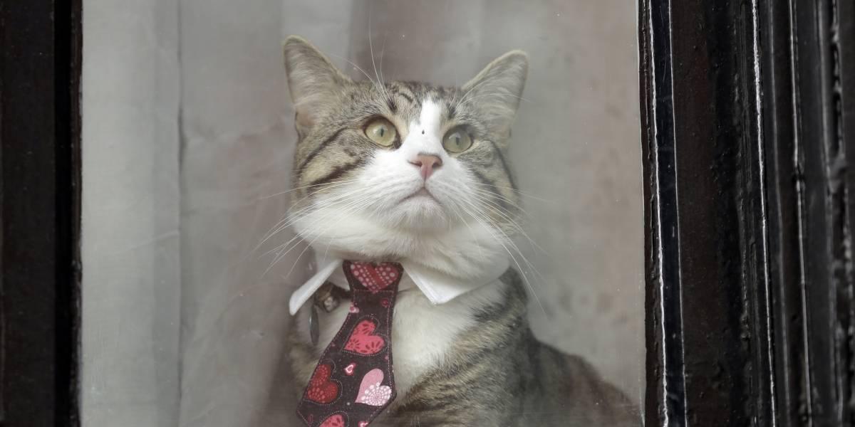 Ultimátum felino a Assange: o cuida mejor de su gato y lava con más frecuencia el cuarto de baño o lo perderá