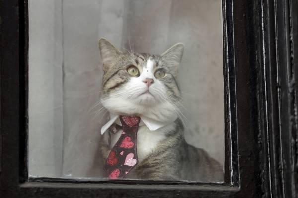el gato de Assange. AP