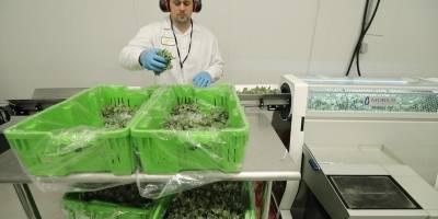 Cannabis en Canadá
