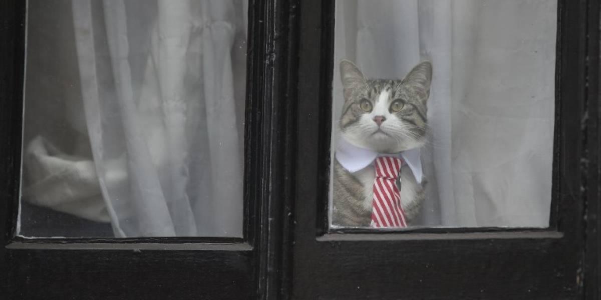Ultimátum de la embajada de Ecuador a Assange para que cuide a su gato