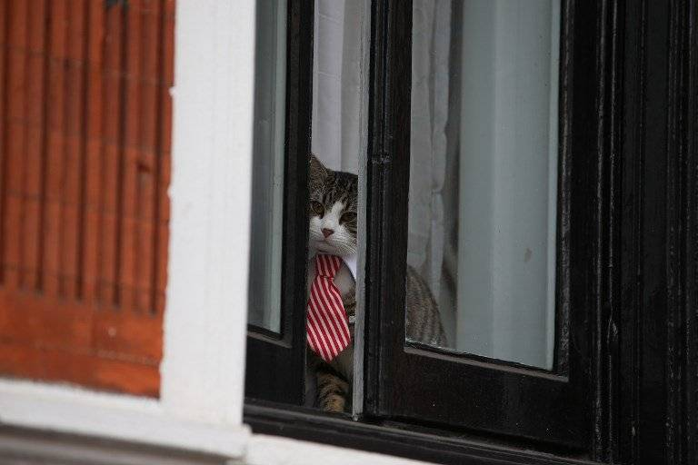 Gato de Julian Assange