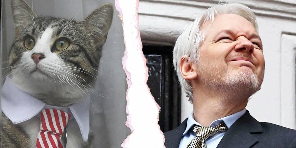 Ecuador exige a Julian Assange que cuide a su gato para regresarle el Wi-Fi