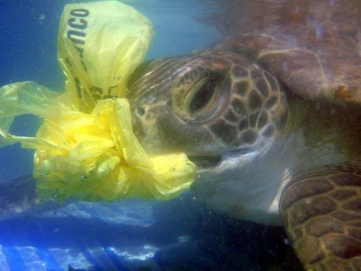 plasticbag-8a499c67697b97e7cd3e92e8e927b3f3.jpg