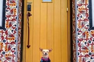 Perros y puertas