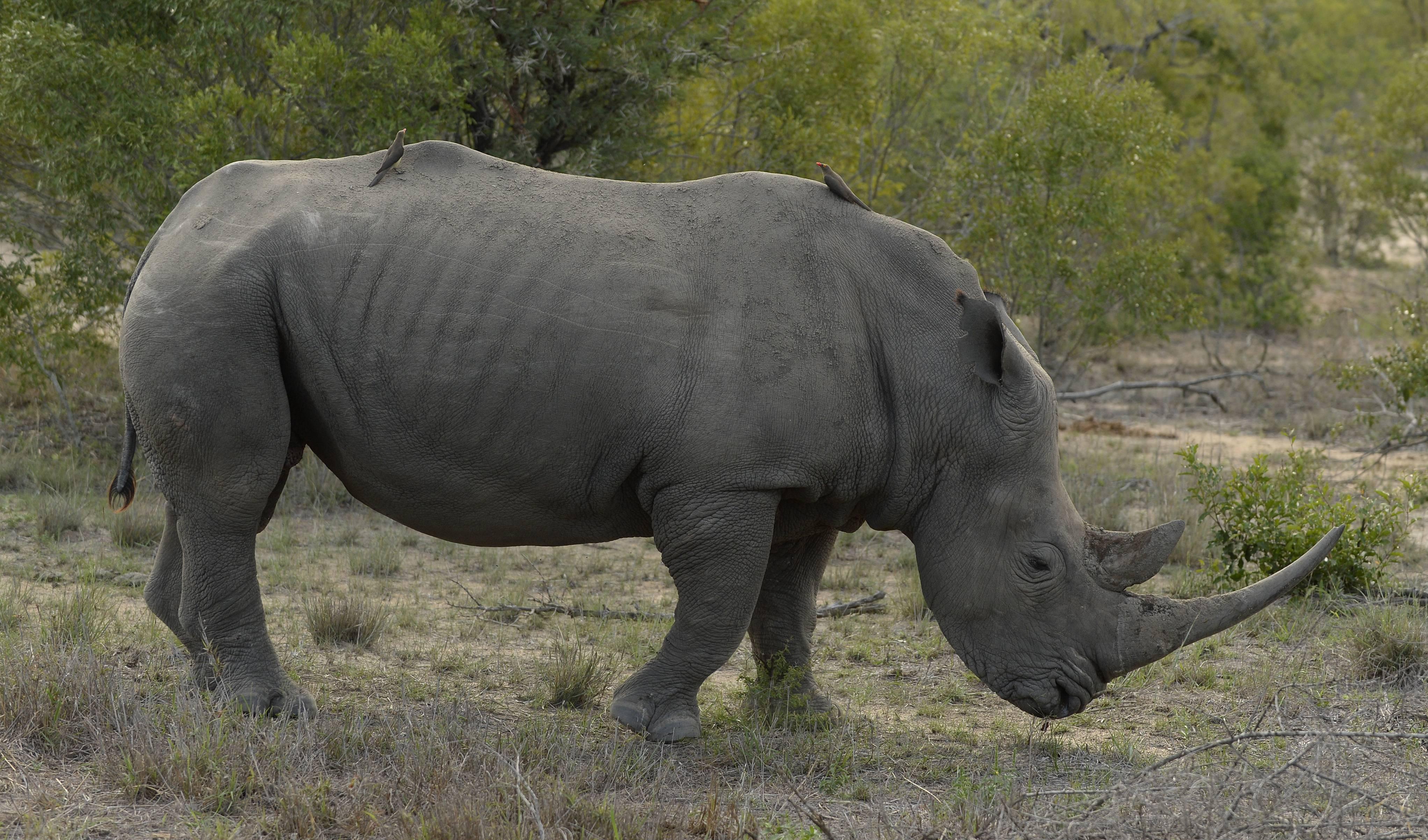 Los mamíferos han perdido millones de años de historia evolutiva gracias a los seres humanos
