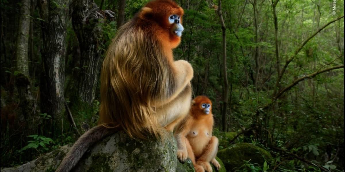 Wildlife Photographer of the Year: confira os melhores ângulos da vida selvagem