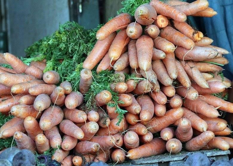 Zanahorias chilenas
