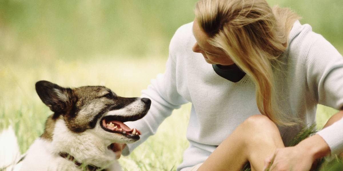 Tu perro intenta entender lo que le dices, según un estudio