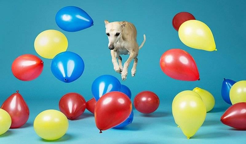 globos por un perro