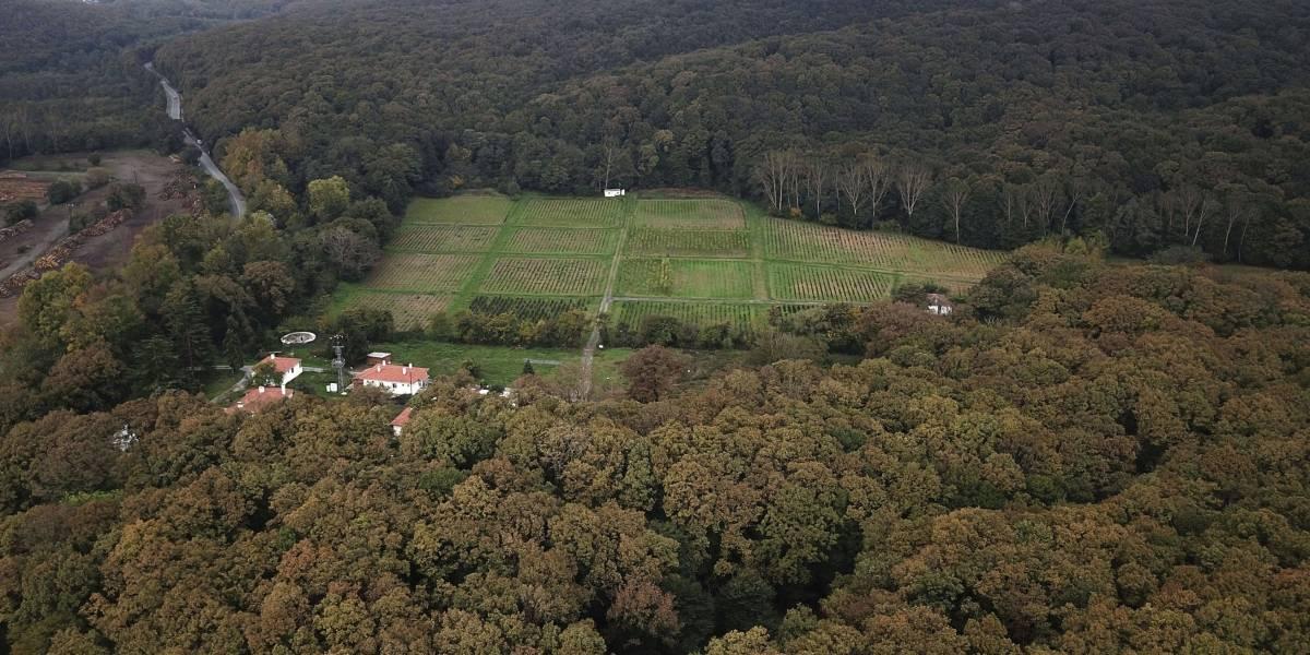 Nuevas revelaciones sobre el periodista desaparecido: la búsqueda se traslada al bosque y una furgoneta
