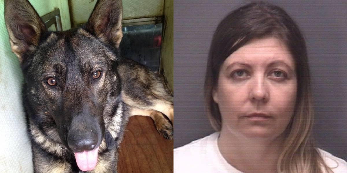 Dueños de una perrera eran investigados por tenencia ilegal de armas pero la policía descubrió lo peor: tenían videos caseros violando mascotas