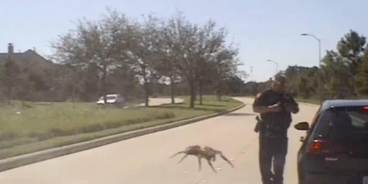"""La peor pesadilla de todas: el terrorífico momento en que araña gigante """"ataca"""" a policía durante control carretero"""