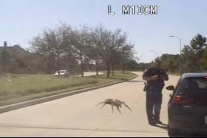 La peor pesadilla de todas: el terrorífico momento en que araña gigante