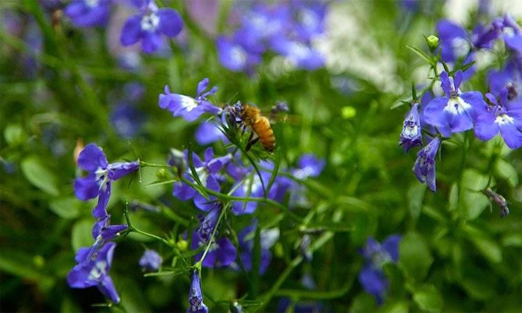 La planta mosquito genera mucho néctar