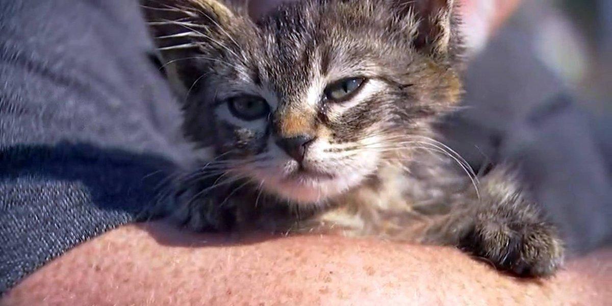 La crueldad no tiene límites: pegaron las patas de un pequeño gatito a la carretera pero un héroe lo salvó