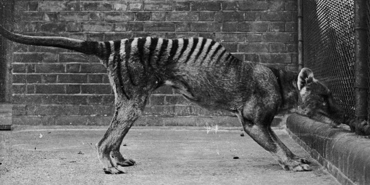 Más de 300 mamíferos han sido erradicados por los humanos