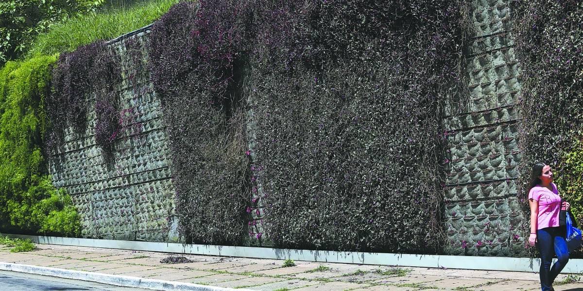 Vandalismo prejudica jardim vertical na avenida 23 de Maio