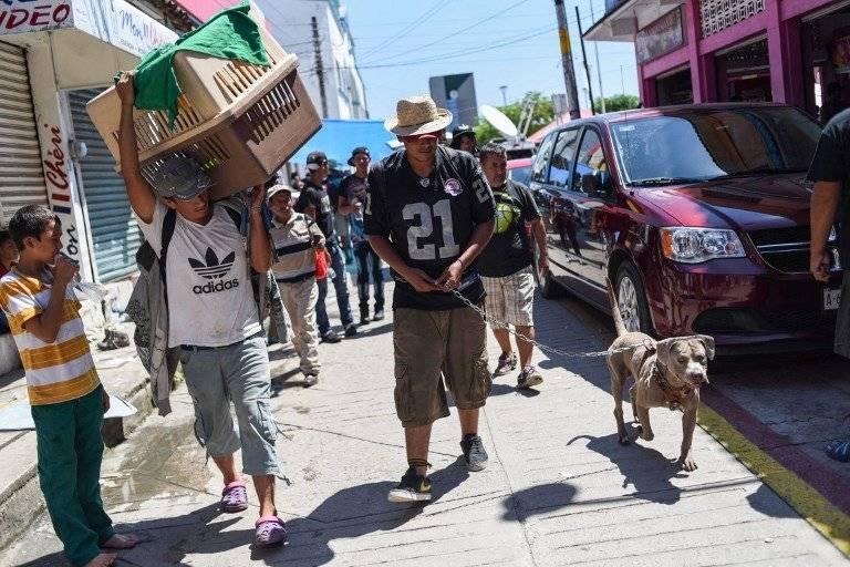 Bolillo, el perro que viaja con la caravana de migrantes hondureños