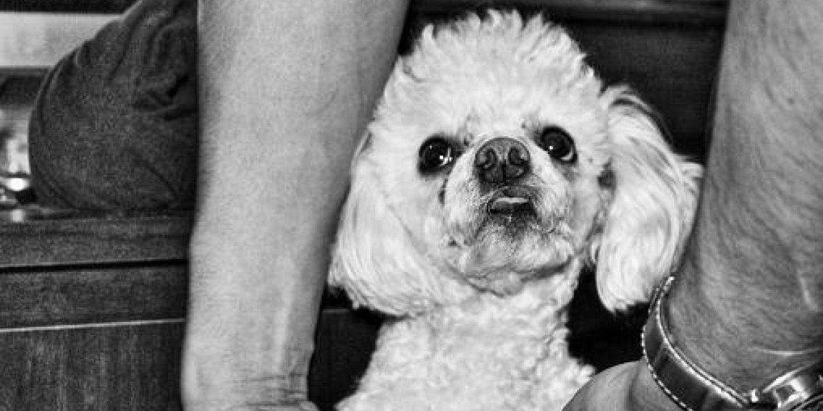 Insólito accidente cumple 30 años: el día en que la caída de un perrito desde el piso 13 provocó la muerte de tres personas