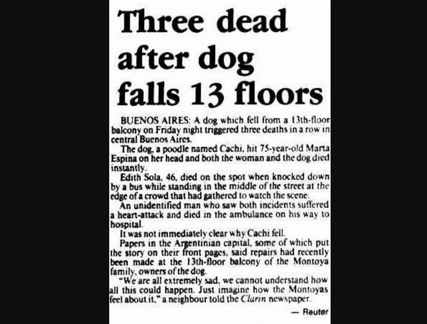 accidente perro argentina