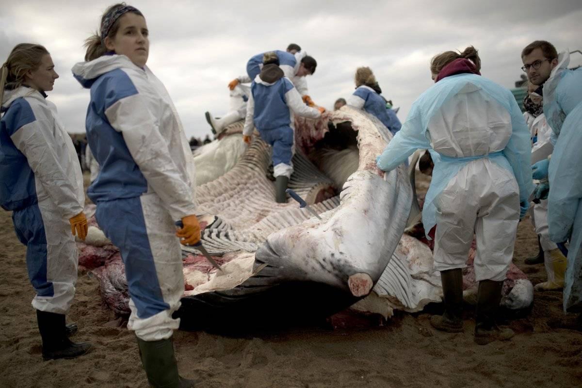 Veterinarios analizan las causas de la muerte Foto: AP