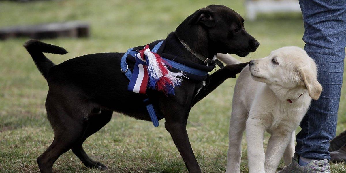 """Petpelusa: Gobierno organiza la que será """"la fiesta animal del año"""""""