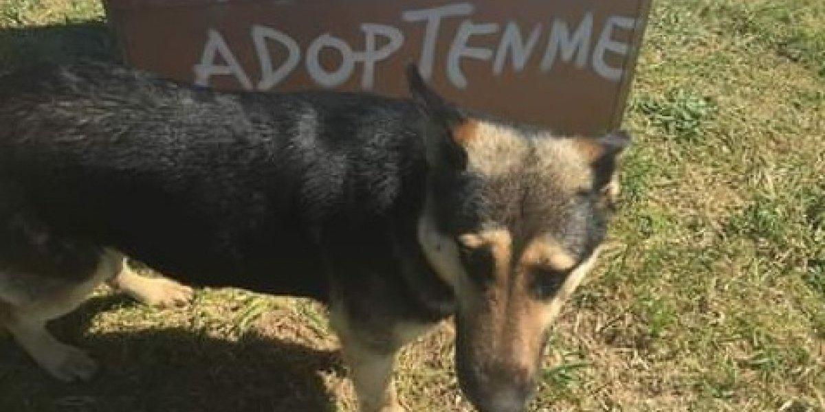 """""""No lo dejen morir de hambre"""": el angustioso llamado en Twitter para rescatar a perrito abandonado en peligroso sector de la Ruta 5 Sur"""
