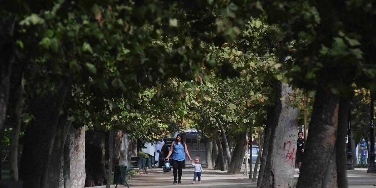 OJO Ley Arbolito: Antiguo estudio ya decía que el Plátano Oriental NO existe en Chile