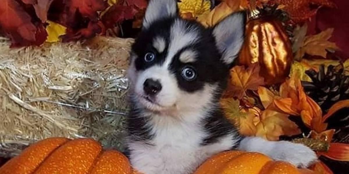 10 adorables ideas para disfrazar a tu mascota en Halloween