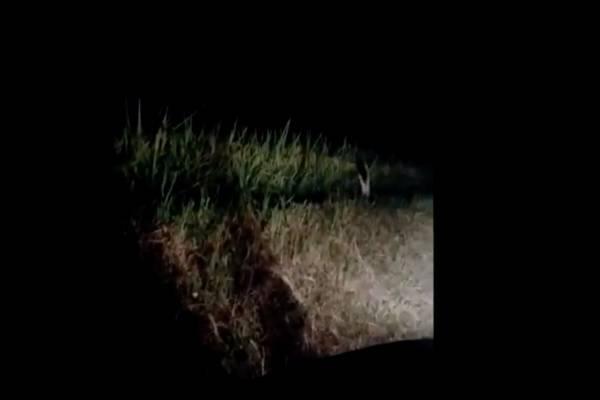 Video: Graban a supuesto fantasma de un solo pie