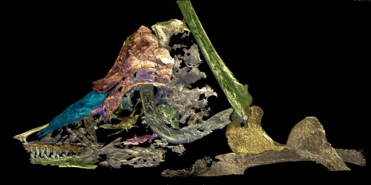 """Científicos logran dar con un """"eslabón perdido"""" de la evolución examinando un olvidado fósil"""